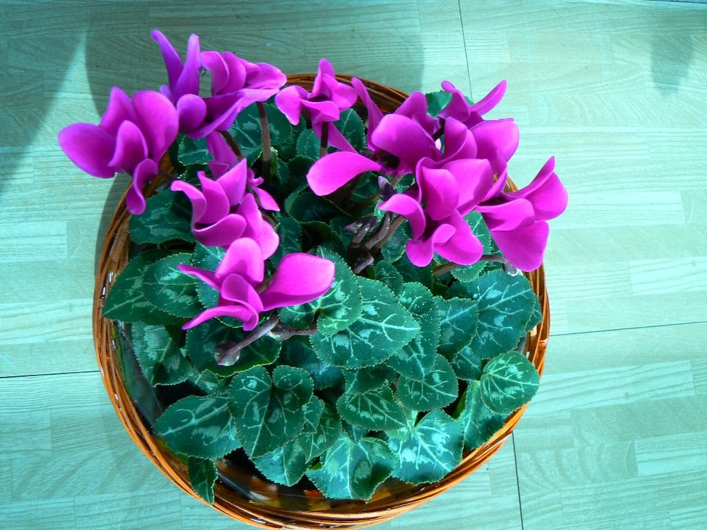Mes plantes mais quelles plantes le blog de titia - Plante balcon hiver ...